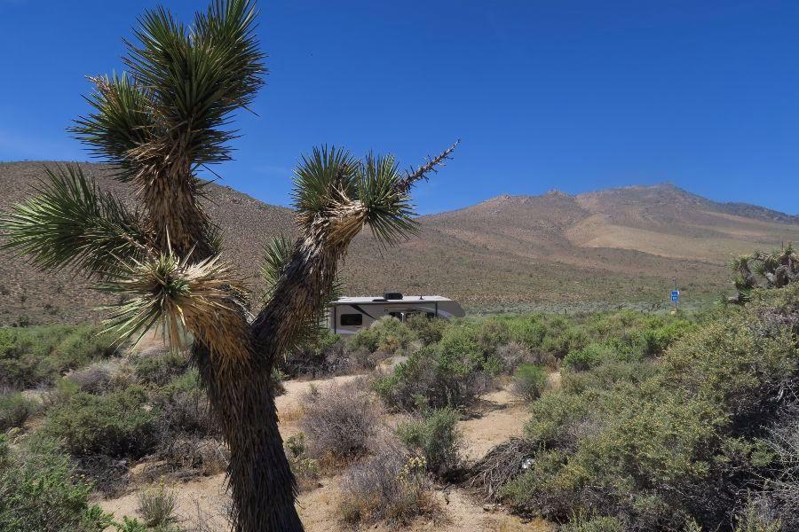 Mojave-dessert-cactus