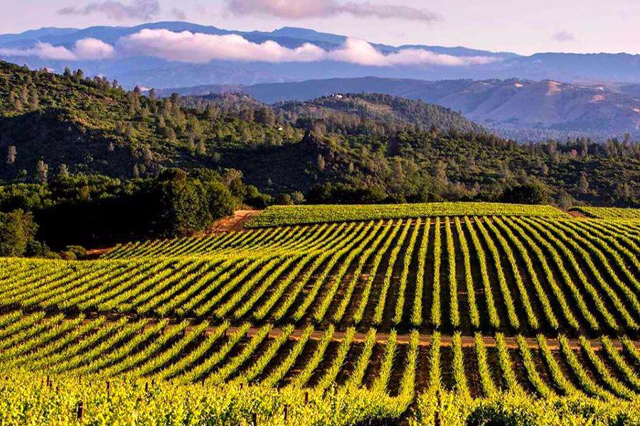 wineyards-california